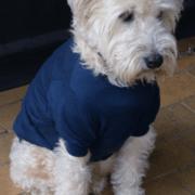 Merino Dog Loungewear - Saphire. Med