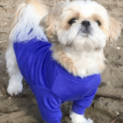 Merino Sweater for Dogs